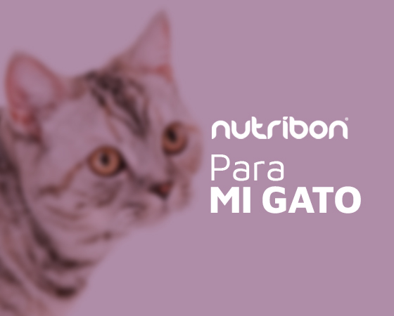 Nutribon Gatos