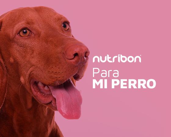 Nutribon Perros